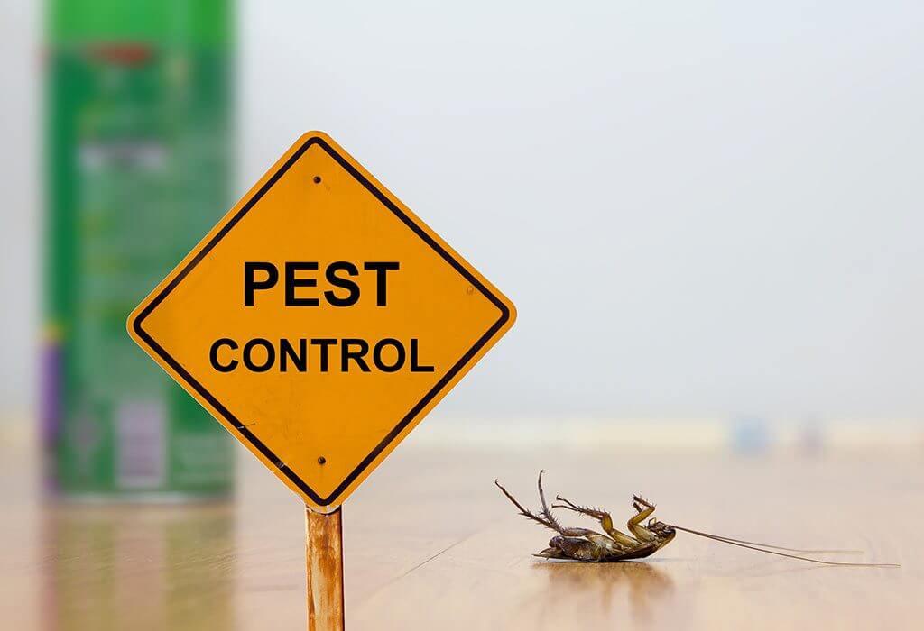 jasa pembasmi serangga bandung